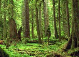 Mieux comprendre les réalités autochtones : une formation pour les futurs ingénieurs forestiers du Québec
