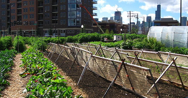 640px-New_crops-Chicago_urban_farm