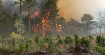 640px-Bugaboo_forest_fire