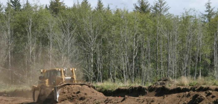 Bulldozer_cutting_down_the_cranberry_bog_dikes_and_contouring_the_bog