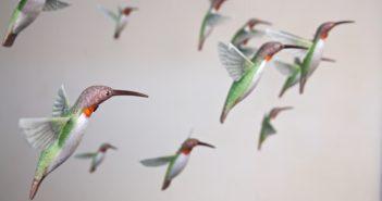 birds-2_2508