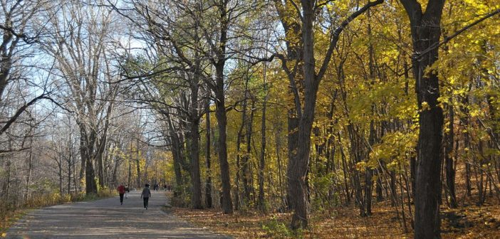 Park_Mont_Royal_(5203038181)