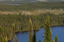 1024px-Taiga_Landscape_in_Canada