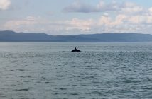 Whale_Watching_on_the_Saint_Lawrence_river