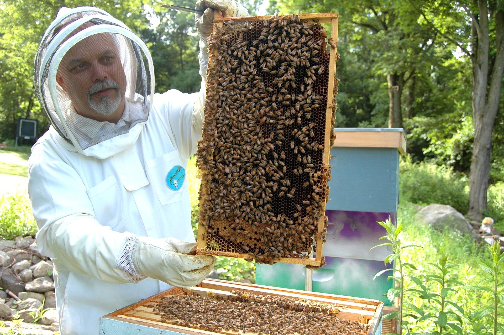 beekeeper-682944_1920