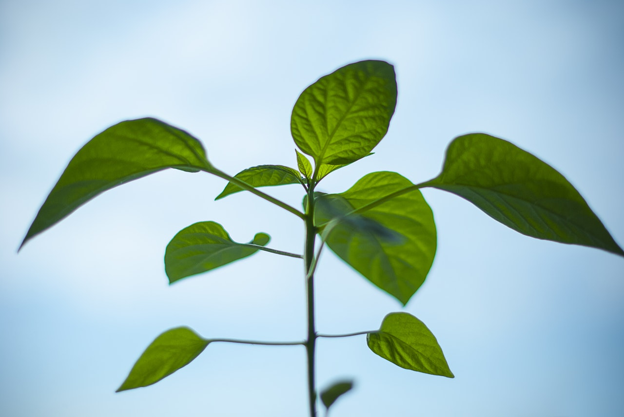 nature-plant-morning-green