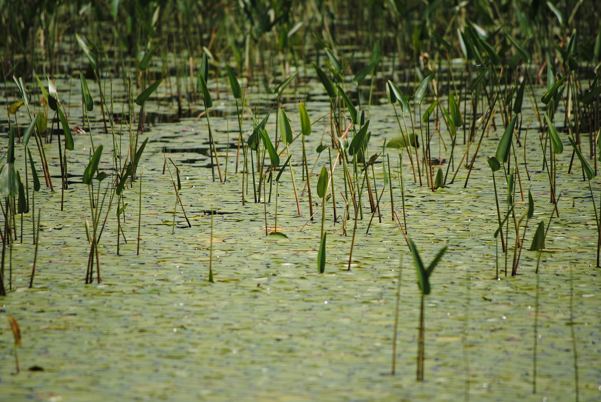 swamp-169519_1920