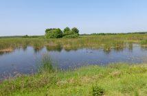 wetland-968762_640