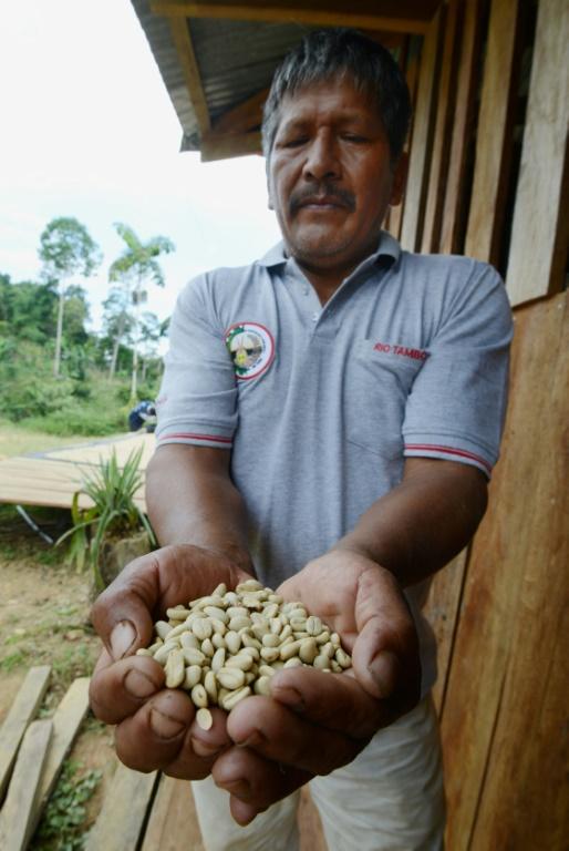 AFP/Archives / CRIS BOURONCLE Javier Sedano, producteur de café de Satipo au Pérou, montre une poignée de grains de café le 28 juin 2017