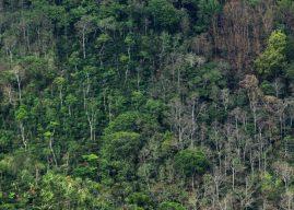 Le satellite d'observation Venµs au chevet de la végétation