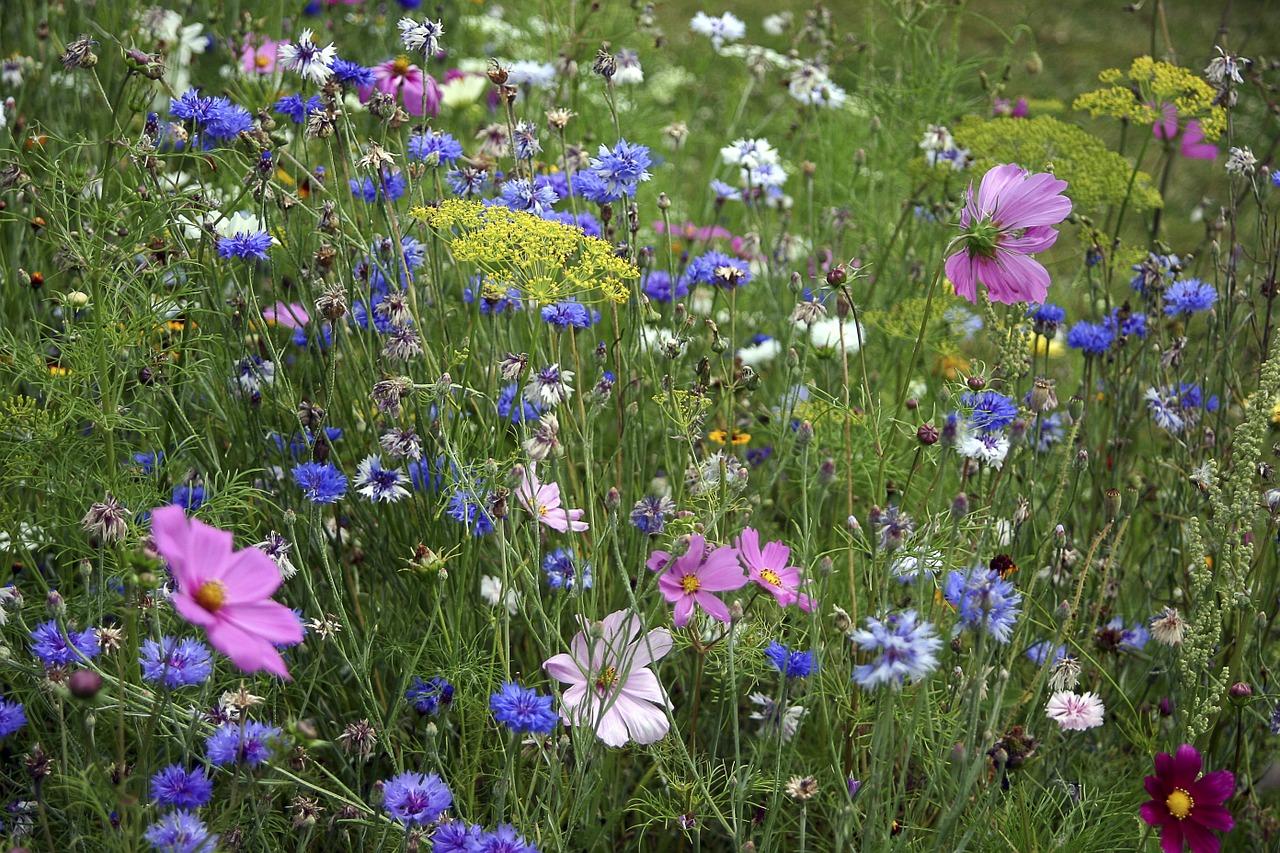 fleurs-des-champs-830388_1280