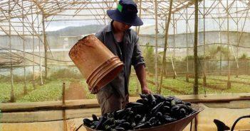 1-Cover_eggplants