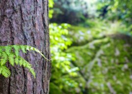 Sans arbres sains, pas de population en santé